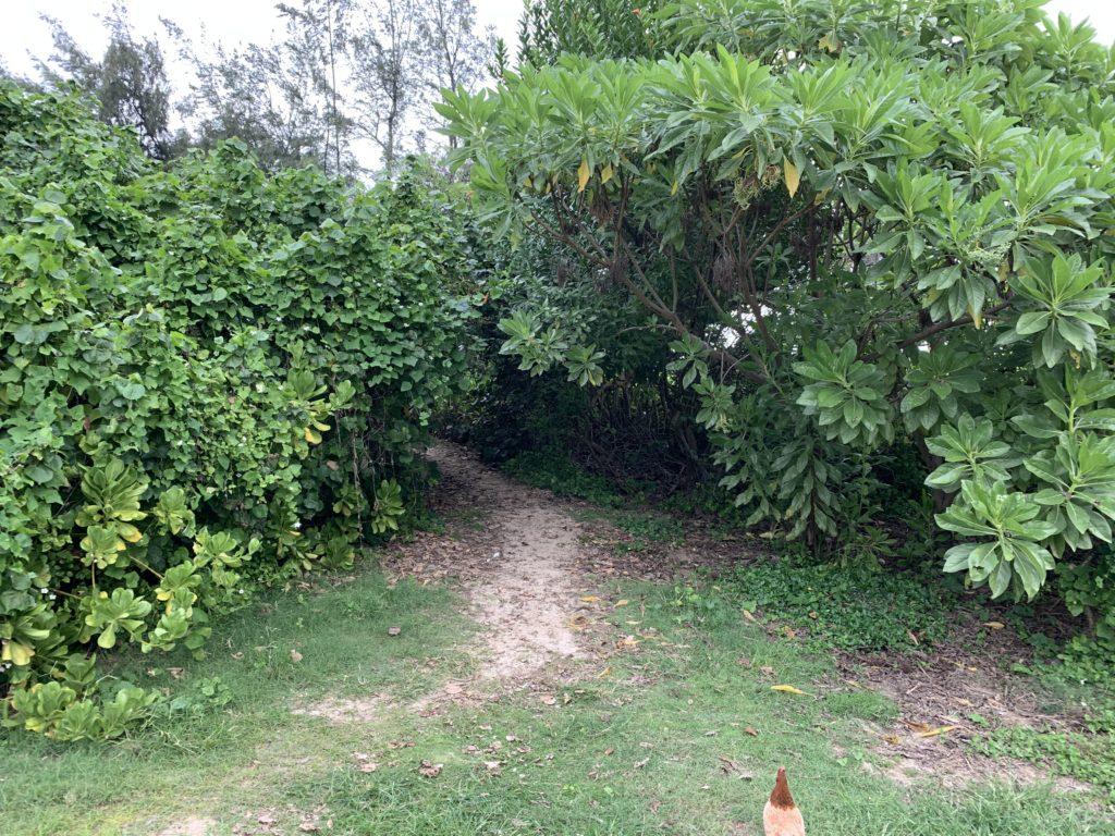 Kalama_Beach_Park_Path