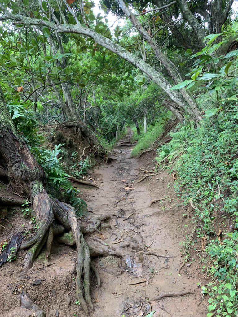 Kauapea_Beach_Muddy_Path