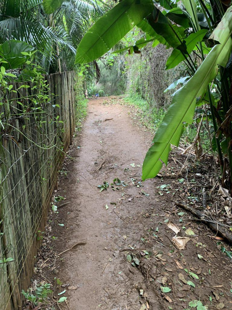 Kauapea_Beach_Path