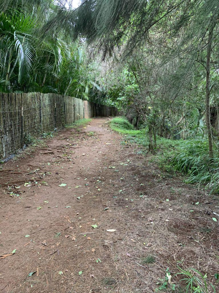 Kauapea_Beach_Trail