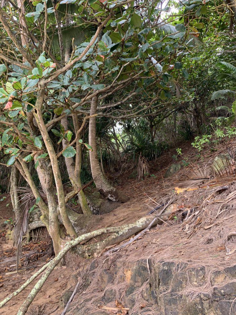 Kauapea_Beach_Trail_Exit