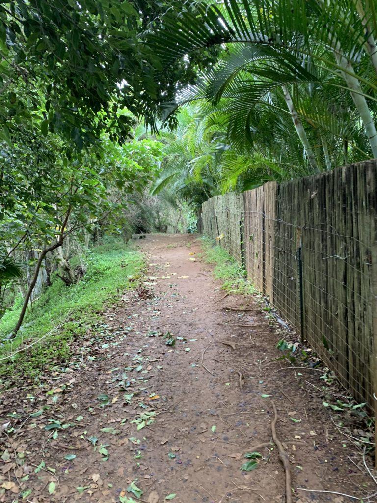 Kauapea_Beach_Trail_Reverse_View