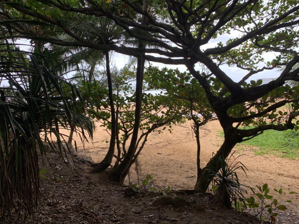 Kauapea_Beach_View_through_the_Trees