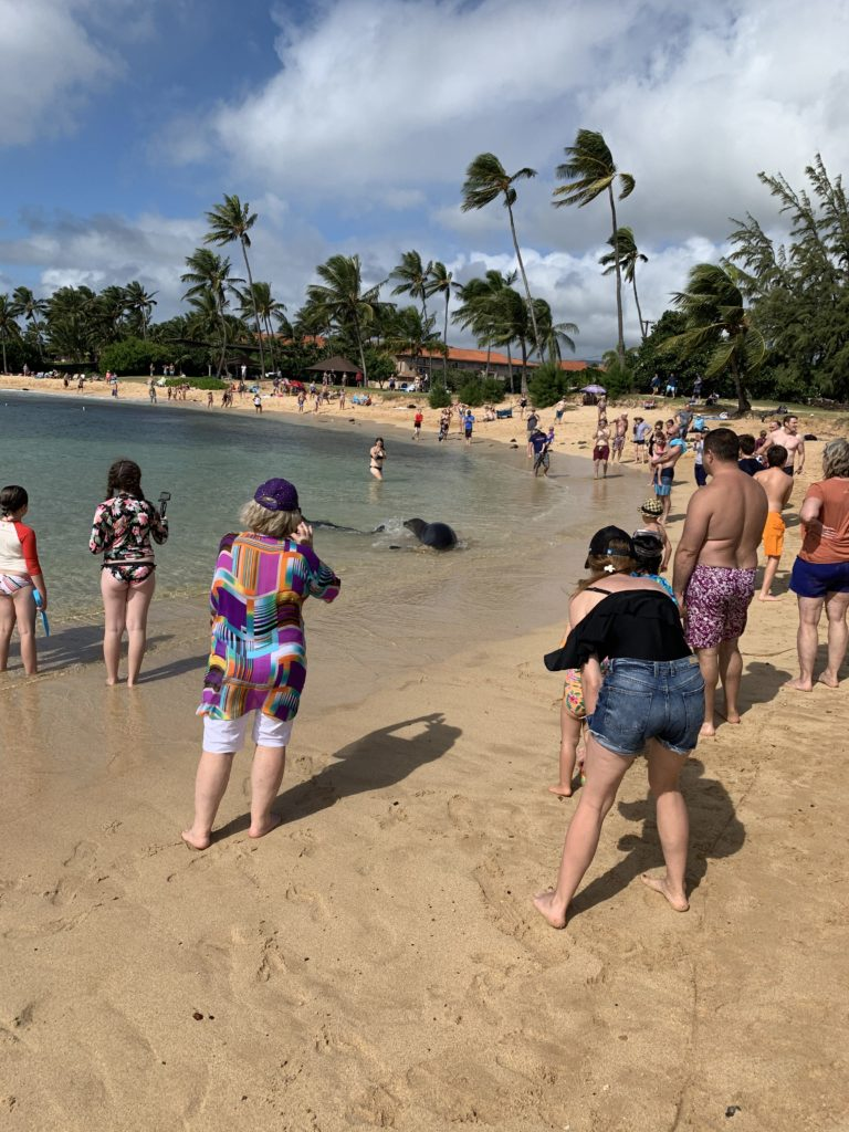 Poipu_Beach_Green_Sea_Turtle
