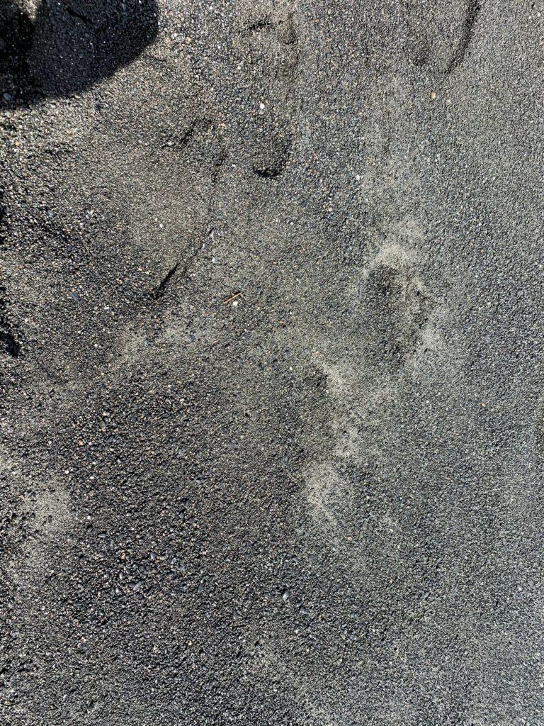 Wai'anapanapa State Park Black Sand Beach